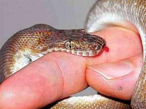 Ý nghĩa và điềm báo của giấc mơ thấy rắn cắn