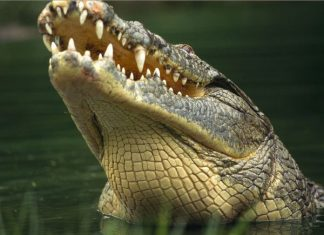Mơ thấy cá sấu gửi tới điềm báo gì? Gợi ý những con số may mắn nào?